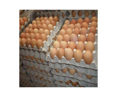 FRESH TABLE EGGS FOR SALE